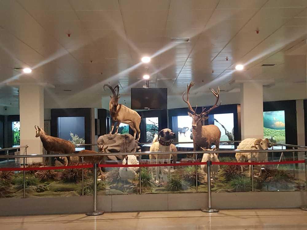 Şehit Cuma Dağ Tabiat Tarihi Müzesi
